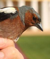Ptactvo Chebska