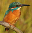 Vítání ptačího zpěvu vChebu