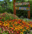 Trvalky a letničky Bečovské botanické zahrady