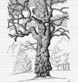Za pozoruhodnými stromy (Kynžvart)