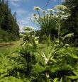 Rostlinné invaze a historické pozůstatky dob minulých