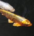 Jak se ryby mohou navštěvovat?