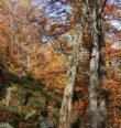 Za zajímavostmi Čerchovského lesa