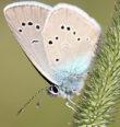Za motýly a květenou na valečské lemy