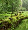 Za zimními houbami do Přírodní rezervace Diana