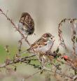 Ptáci vzimě nespí