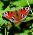 Motýlí obyvatelé zaniklého Horšína