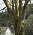 Za památnými stromy a tužebníkem kamčatským