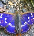 Motýlí obyvatelé Černé Řeky