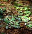 Přežívá suchá léta rdest rdesnolistý?