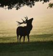 Kam chodí divočáci a jeleni na Doupově