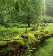 Komentovaná vycházka přírodními rezervacemi
