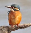 Vítání ptačího zpěvu ve Františkových Lázních a Chebu