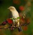 Vítání ptačího zpěvu vHoršovském Týně