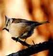 Vítání ptačího zpěvu vHolýšově
