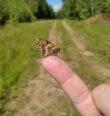 Motýli od Černé řeky