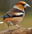 Doupovské hory – významná ptačí oblast