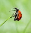 Hmyzí život vměstském parku