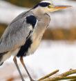 Festival ptactva na Anenských rybnících
