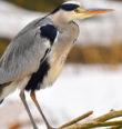 Za ptáky řeky Ohře
